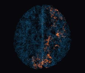 Collective135_neuralnetwork