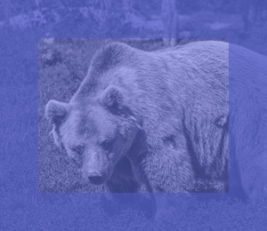 Collective216_Scrollbear