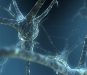 Collective225_Neuron