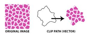 Collective237_clip