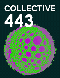 Collective443