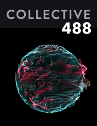 Collective488