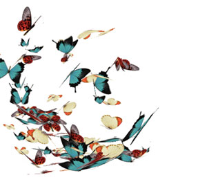 C490_butterflies