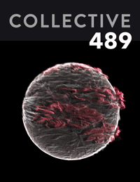 Collective489