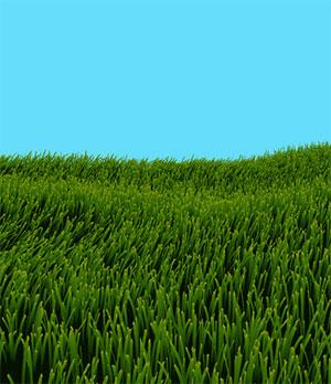 C505_grass