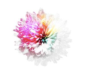 C552_flower
