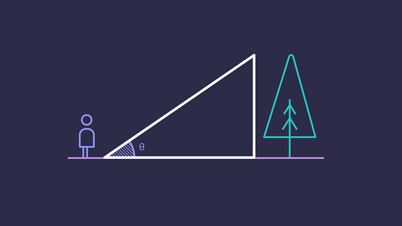 Diagram showing a person nearby a tree. The space between them forms a right-angled triangle.