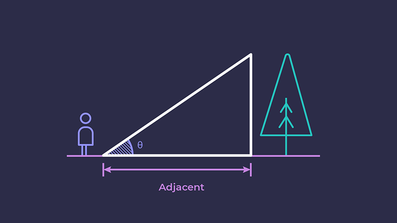 Showing the adjacent side of the triangle, from the person to the tree
