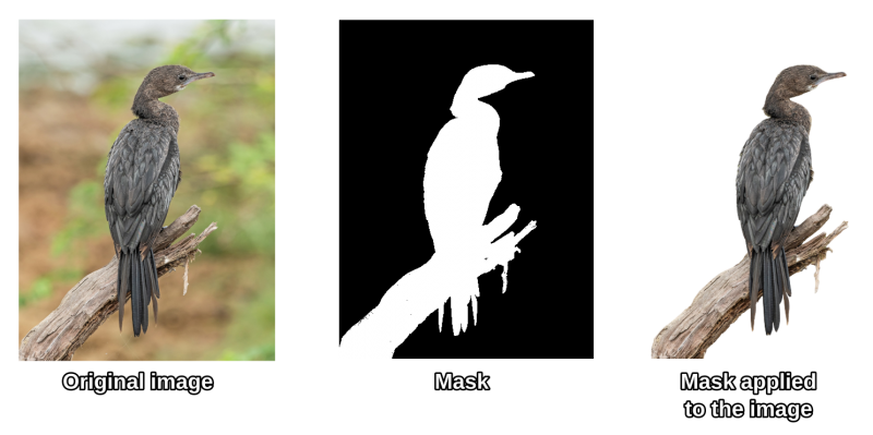 An illustration of how SVG masks work. There are 3 pictures: the first one depicts the photograph of a bird against a blurred natural background; the second shows a masks, with the bird contour in white and the background in pitch black; the third shows the mask applied to the original image, the bird is perfectly cropped from the background, which is now transparent.
